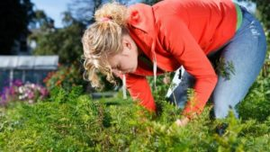 GARDENING TIPS - HOW TO DO AVOID PAIN WHILE GARDENING THIS SPRING